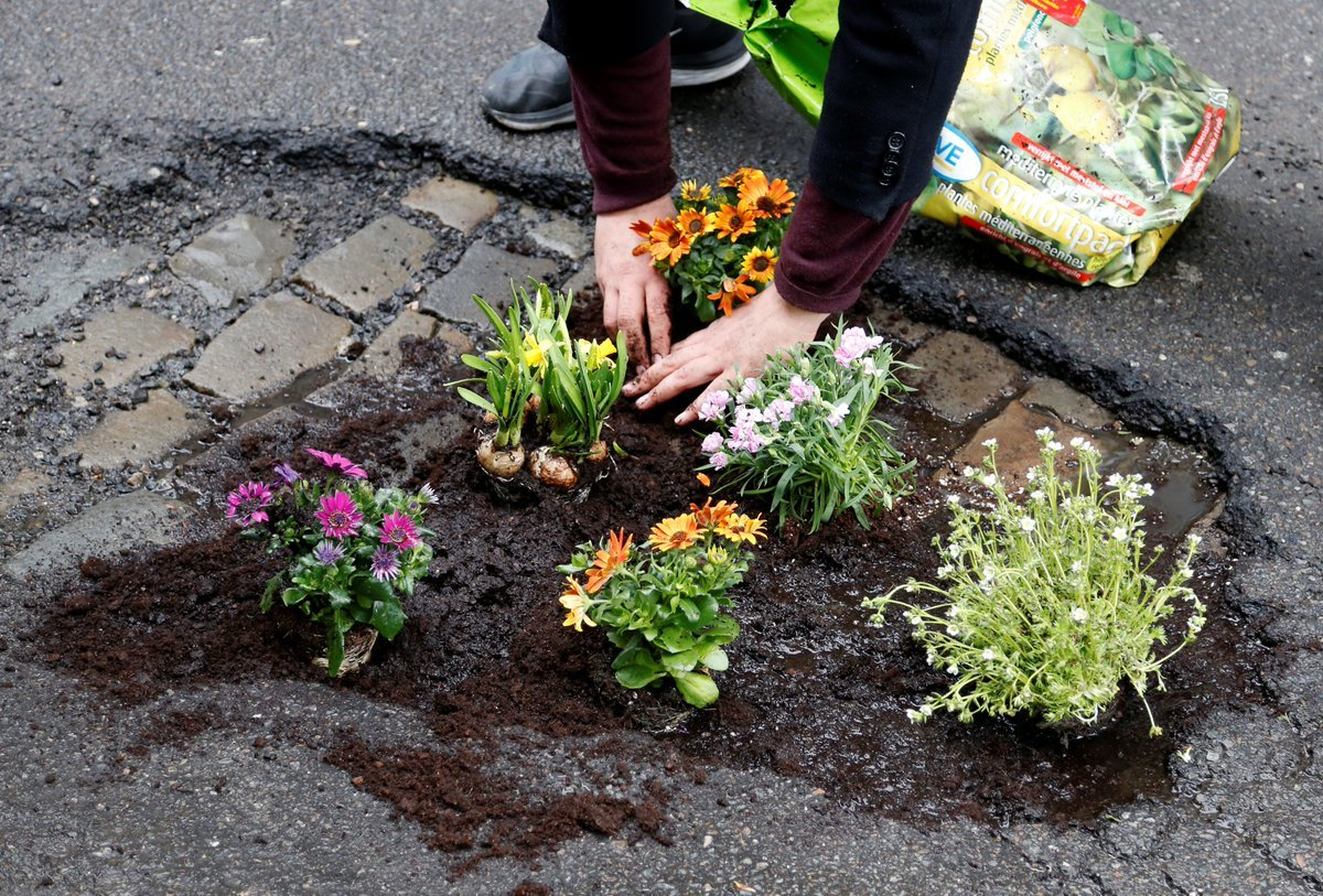 Elaine Santore planting flowers in potholes in Schenectady, New York