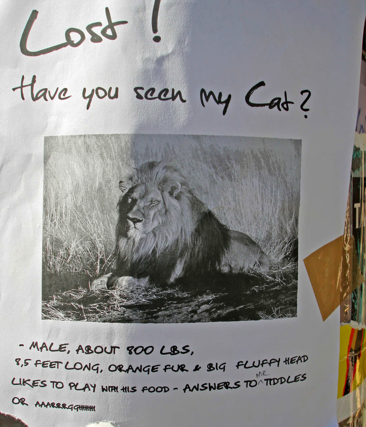 Sign says that lion is lost