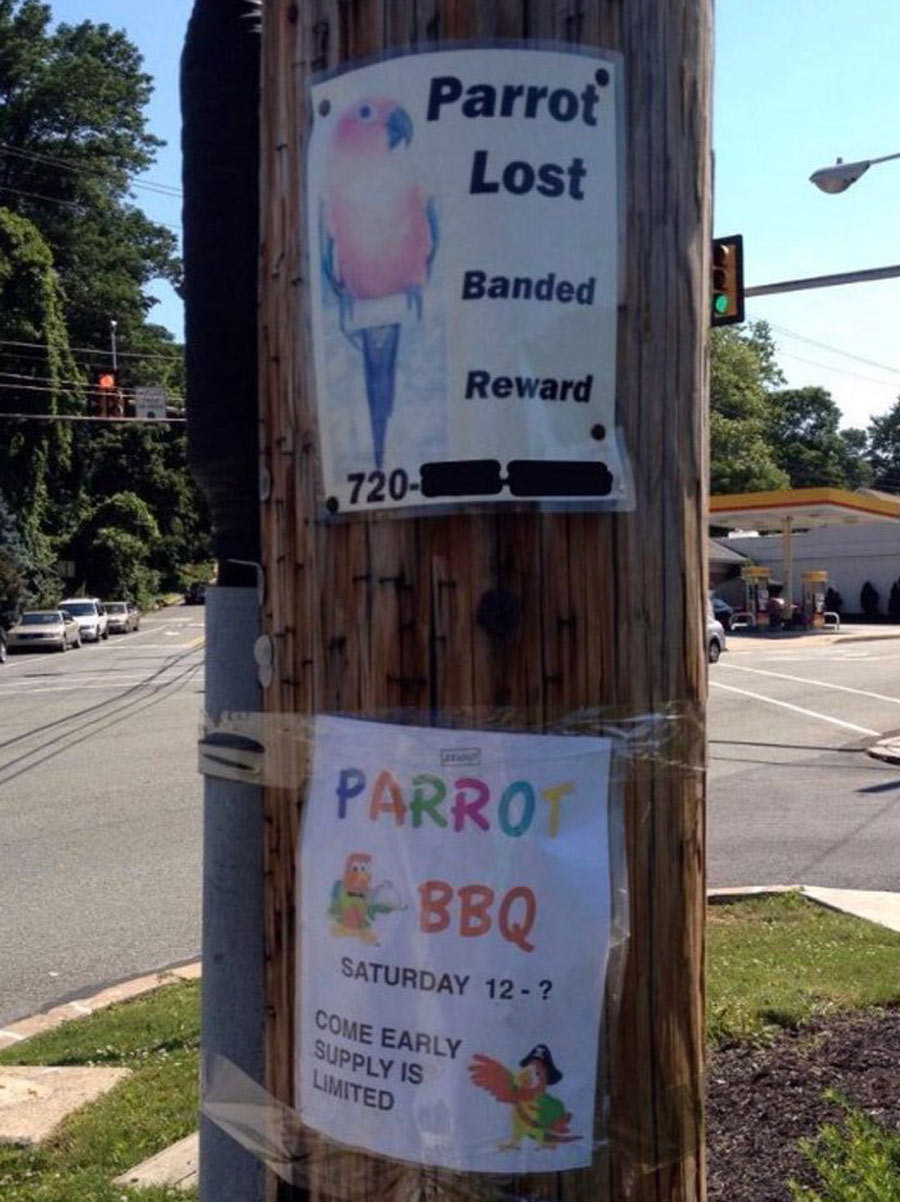 lost parrot bbq poster