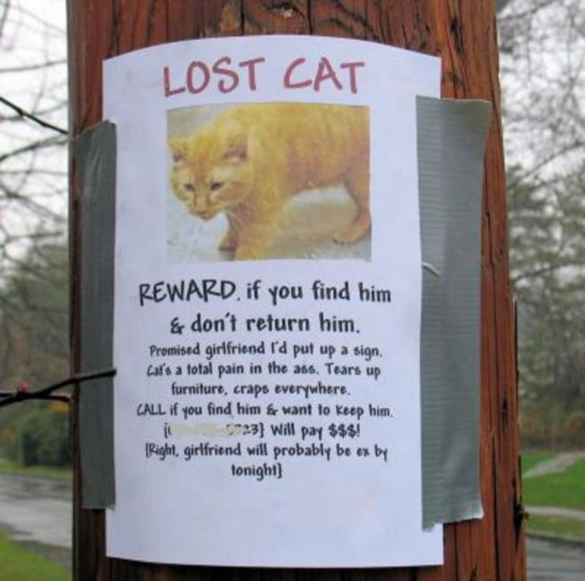 boyfriend was forced to make lost cat sign
