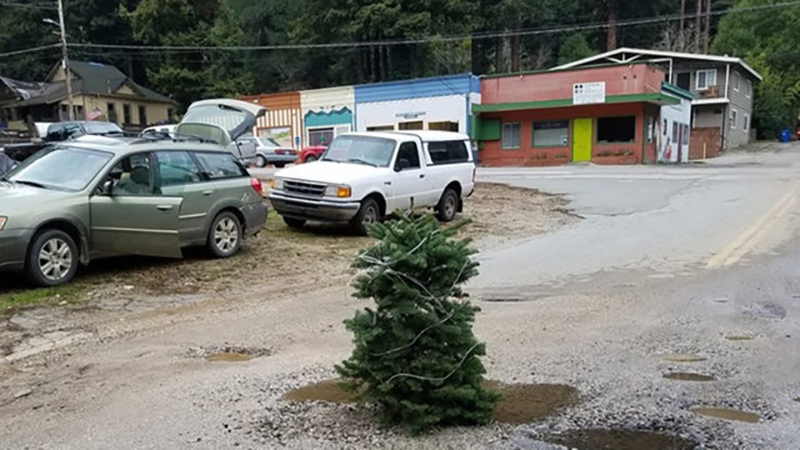 a leftover Christmas tree planted in a pothole in Boulder Creek, California