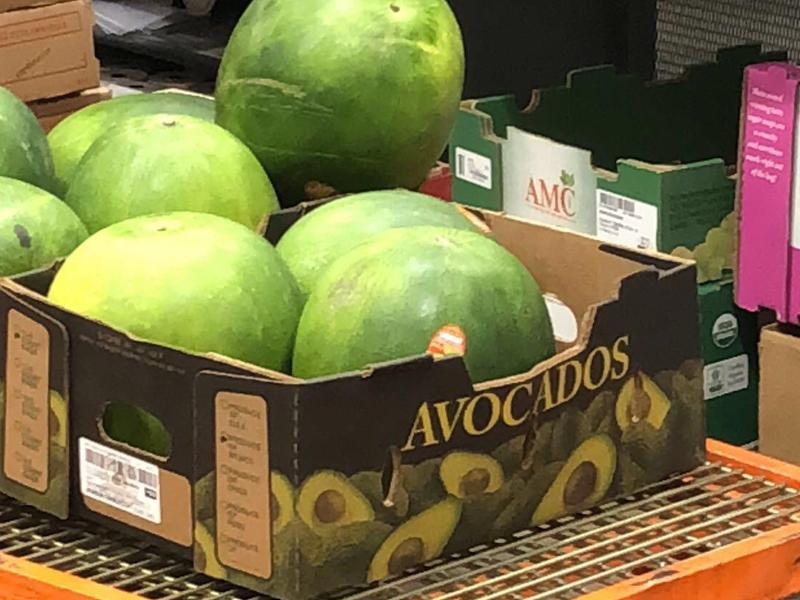 big avocados