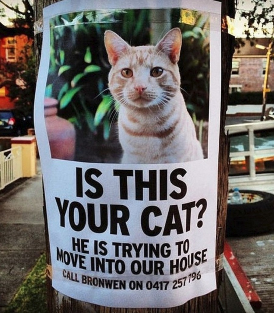 poster says cat is trying to move into a stranger's home