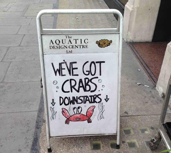 crabs-downstairs-aquarium