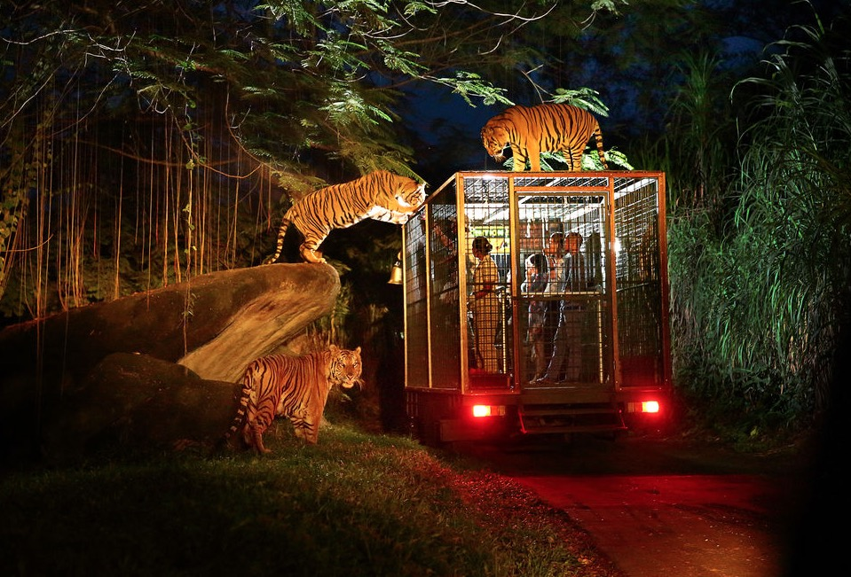 a photo of a night safari