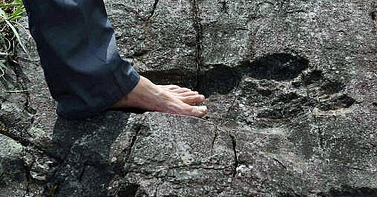 a human putting their foot in a bigfoot footprint