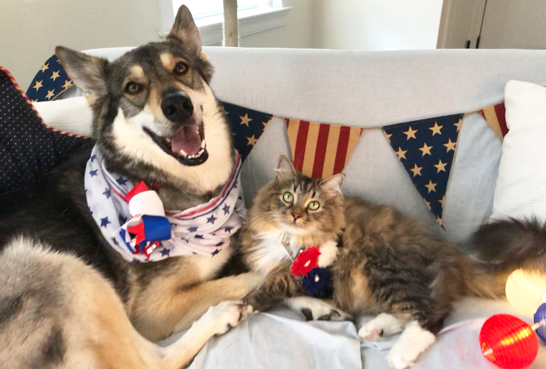 raven and woodhouse celebrating the fourth of july