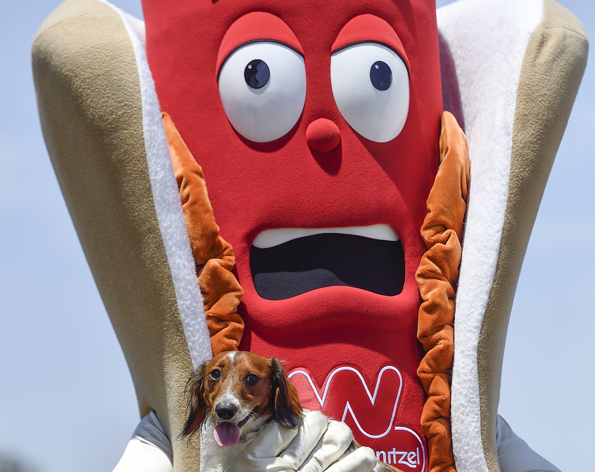 Wienerschnitzel mascot, The Delicious One, holds on to Little Richard, from Lakewood