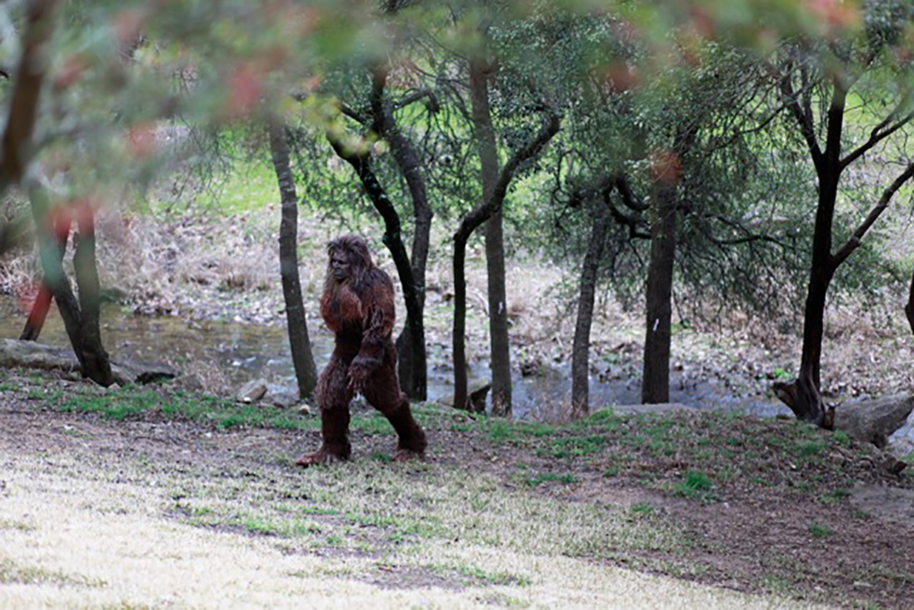 Bigfoot walking in campsite
