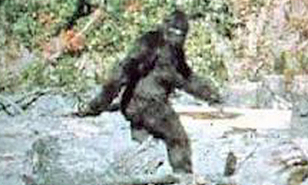 Famous picture of Bigfoot