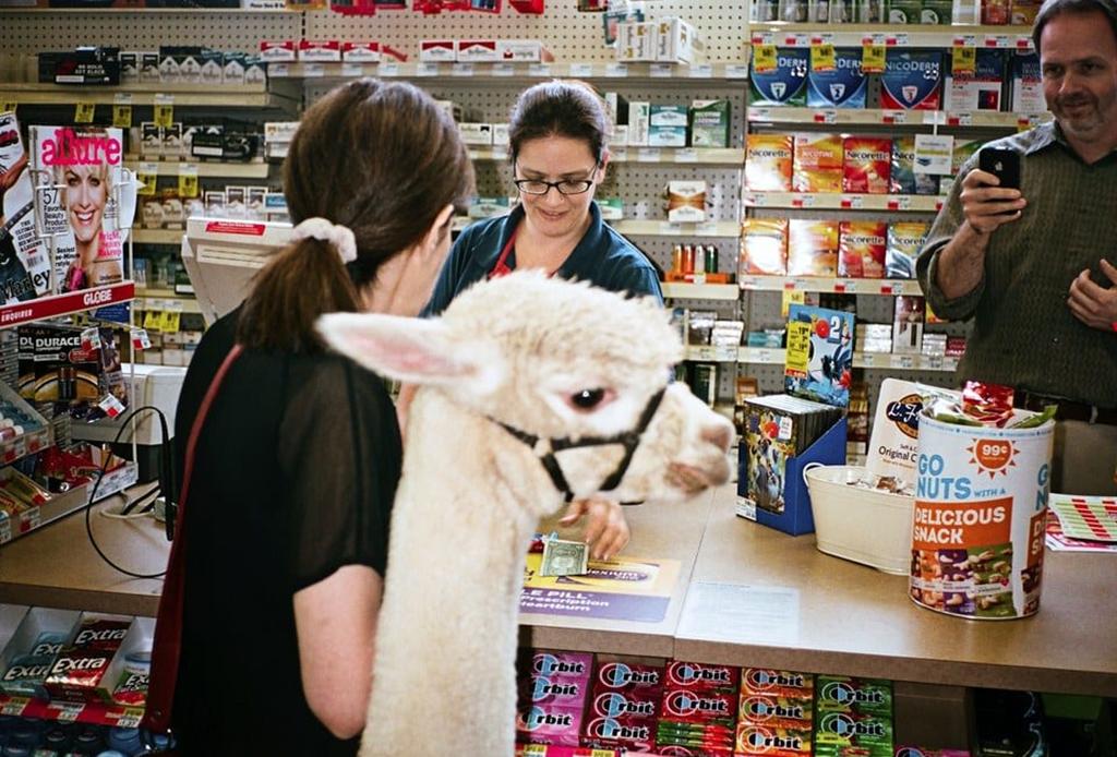 Llama at supermarket