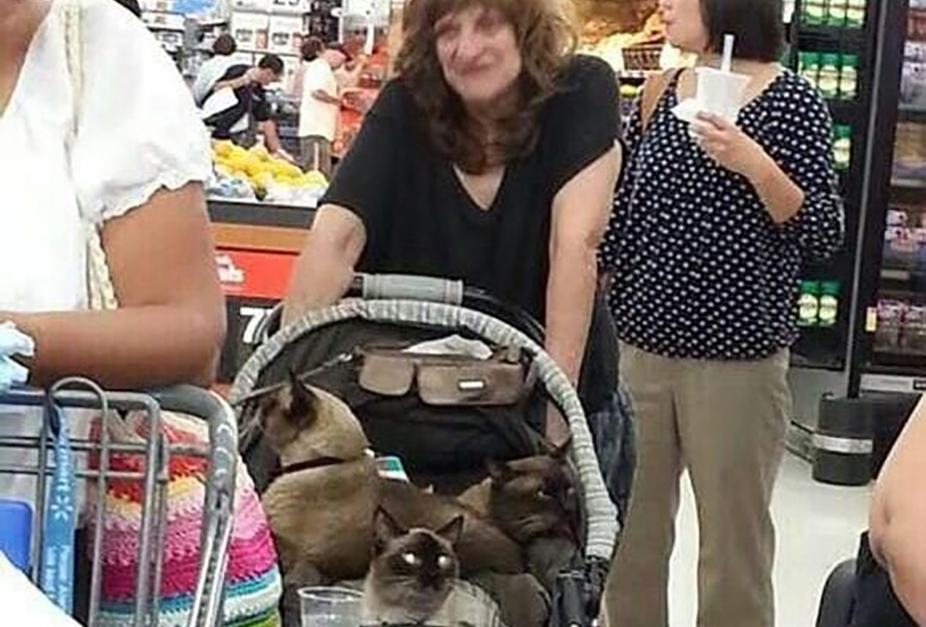 Cats in stroller