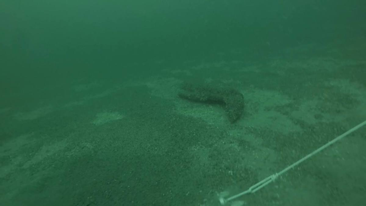 A prototype is barely visible laying on the lake's floor, covered with mussels.