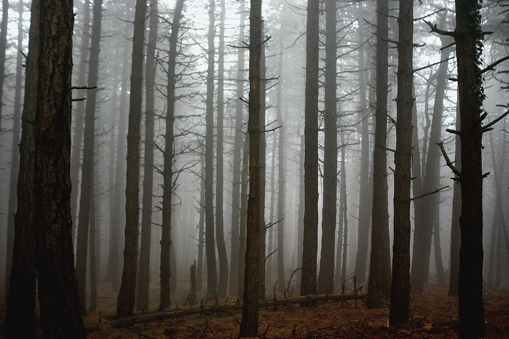Scary picture of a misty forest