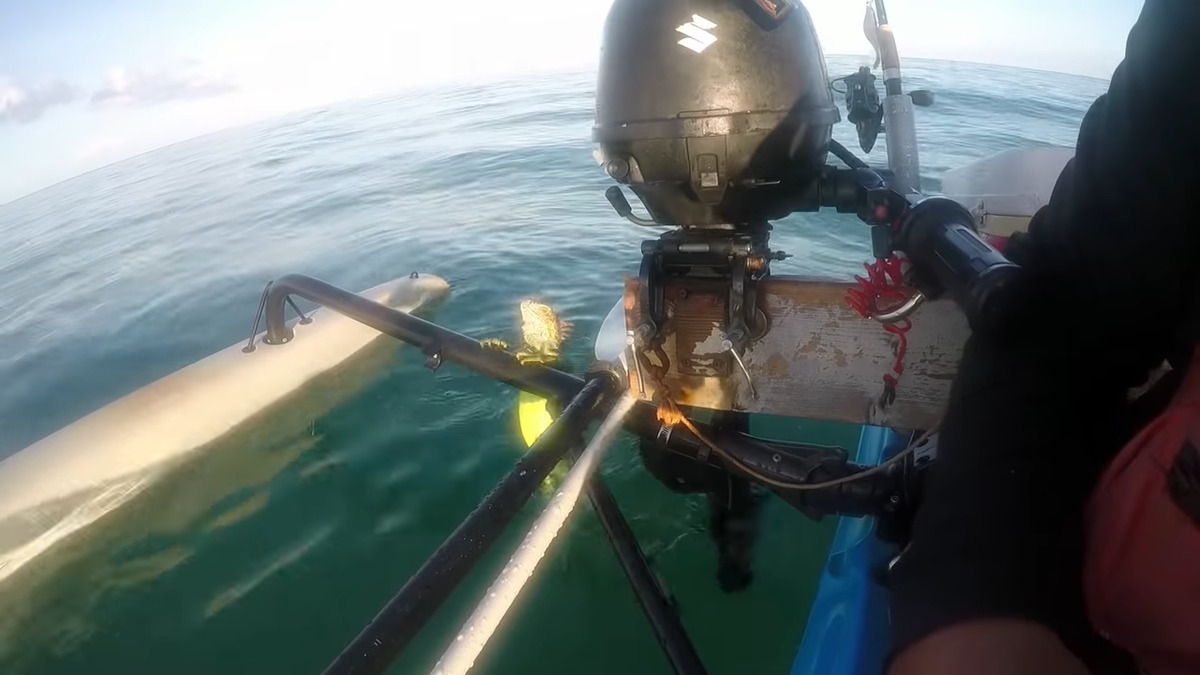 iguana having trouble getting aboard kayak