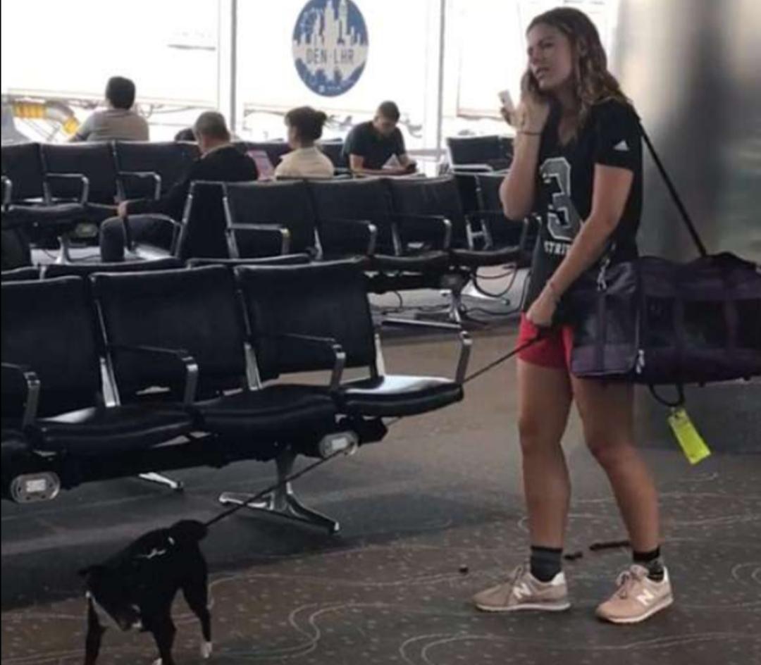 Woman lets her dog poop in Denver International Airport