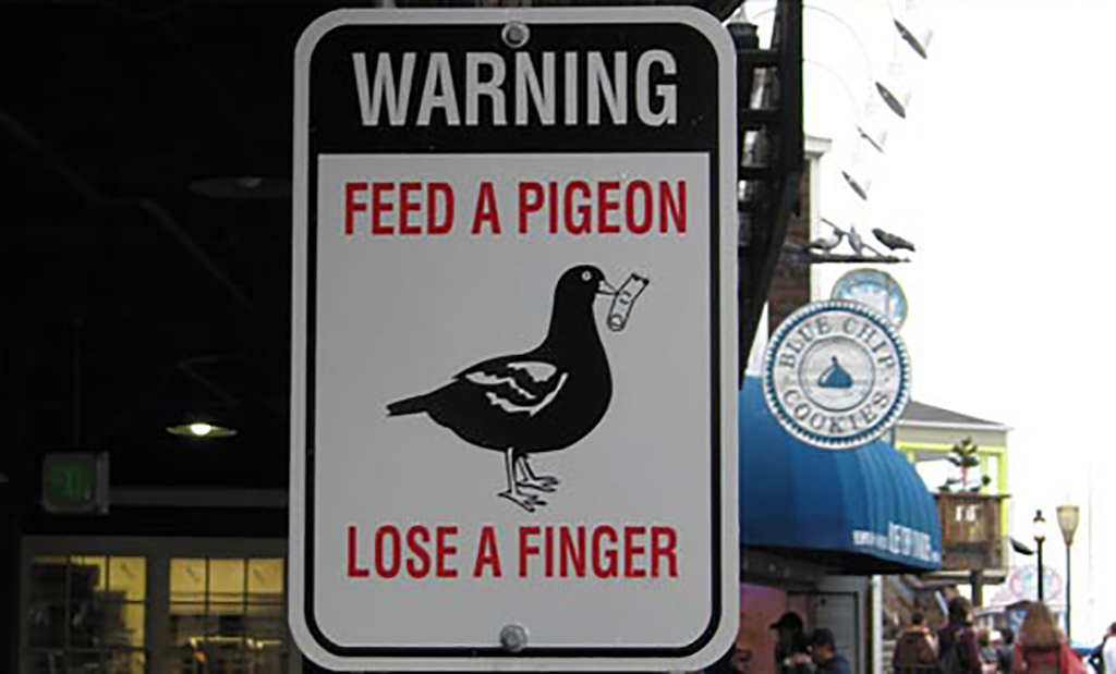 Pigeon warning sign
