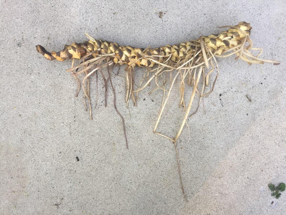 Alien Or Plant