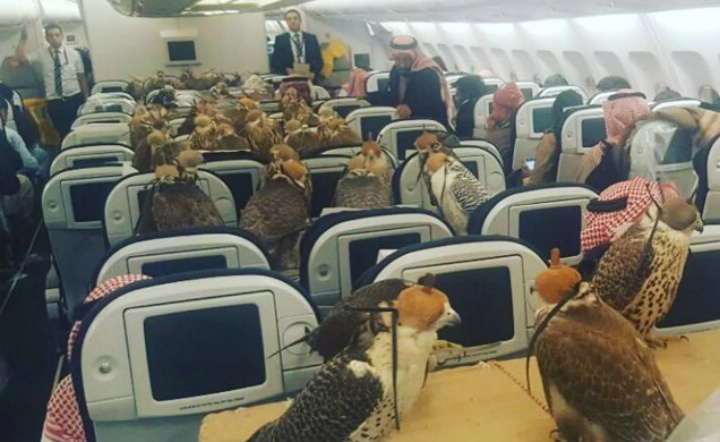 When You're Able To Fly but Your Owner Got You First Class