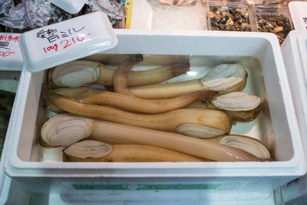 Geoducks in a water bath