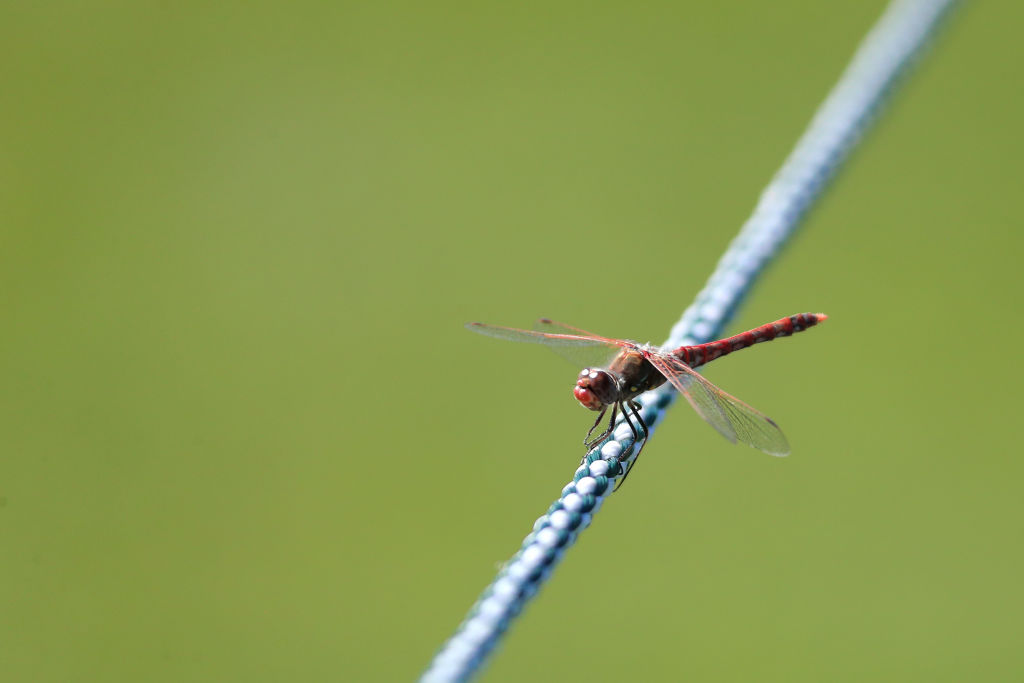 A dragonfly climbs down a rope.