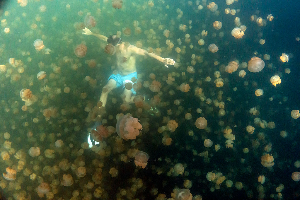mysterious jellyfish lake in palau