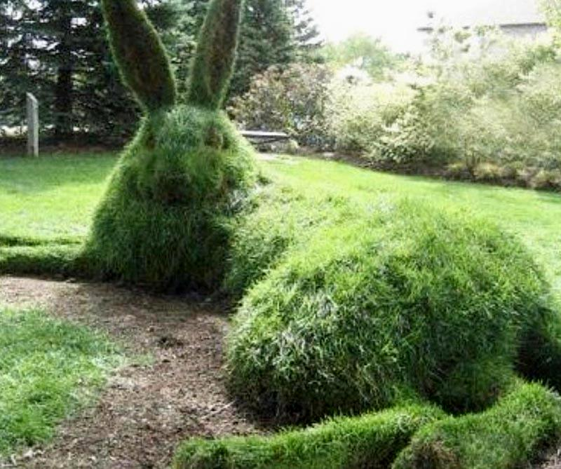 A large bush has been shaped to form a giant bunny laying on its side.
