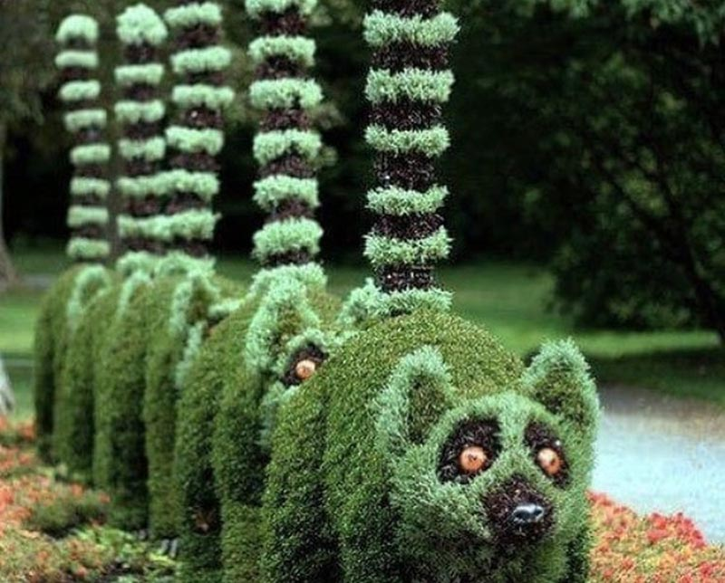 A row of bushes are shaped to look like a line of lemurs.