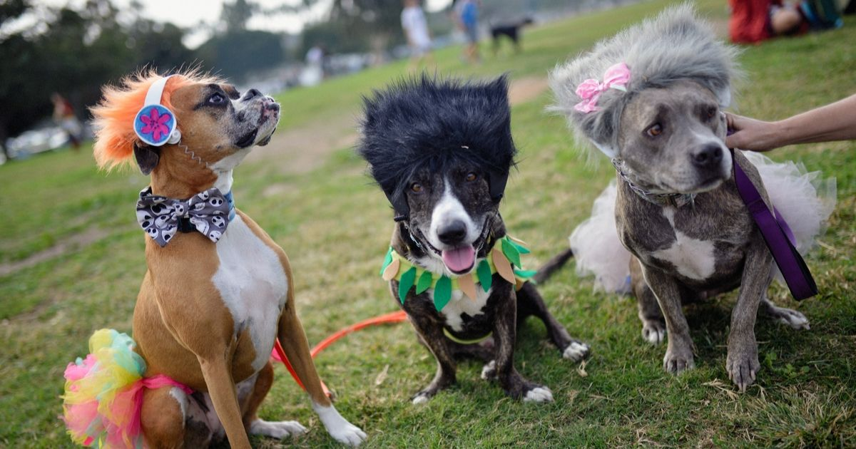 Dogs dressed as trolls participate in the Haute Dog Howl'oween Parade 2018