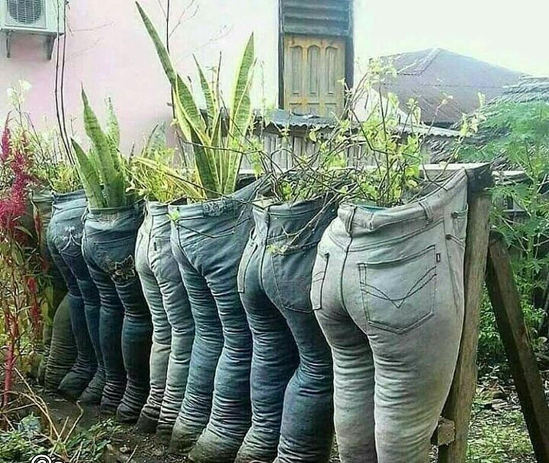 Jeans are pinned to a fence and filled with soil to be used as pots for plants.
