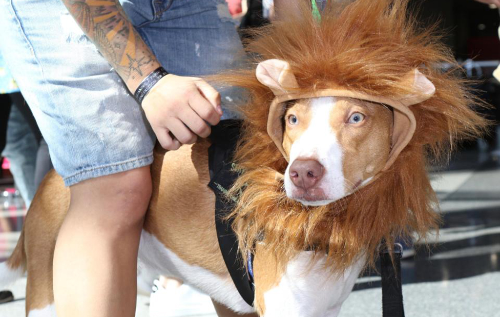 Dog dressed up as Simba