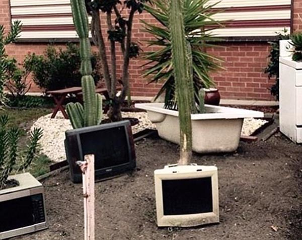 Plants are growing out of various home appliances in a yard.