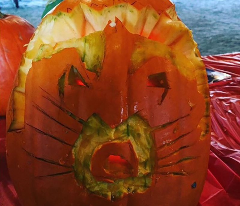 Attempted pumpkin carving of a raccoon