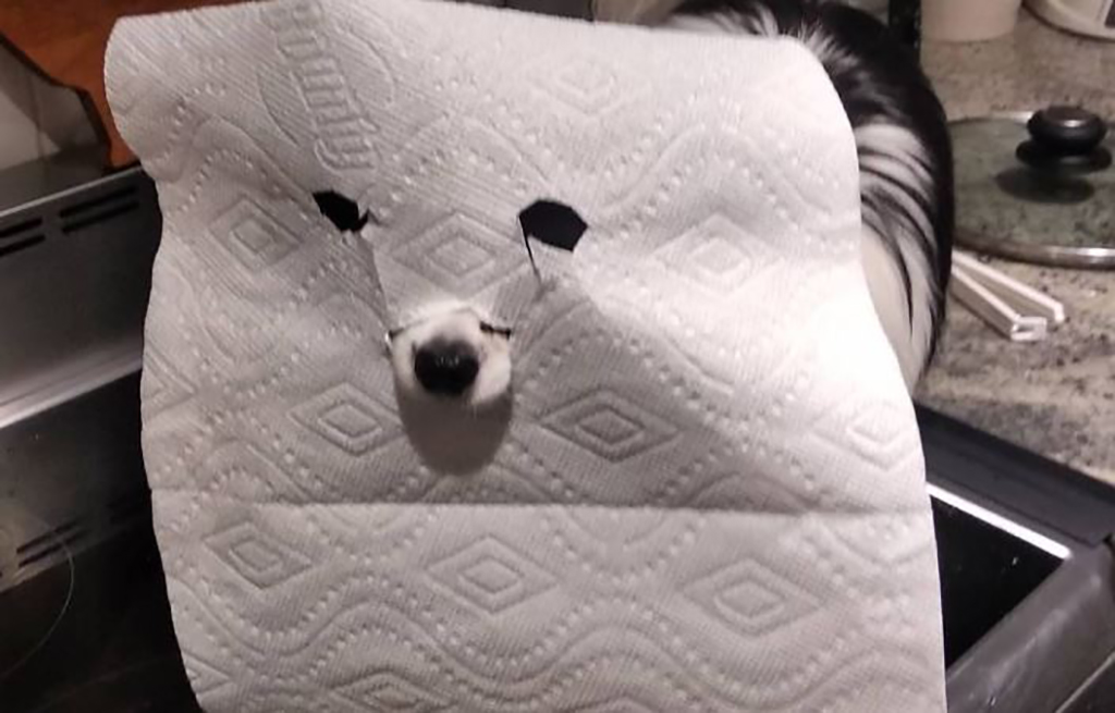Dog with paper towel mask
