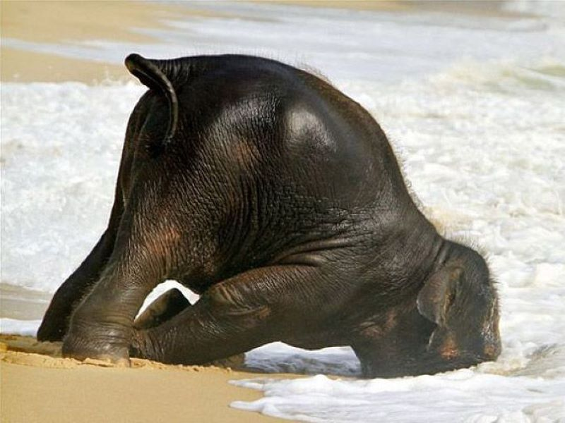 When Sticking Your Head In The Sand Is The Only Option