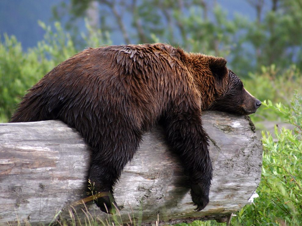 He's Had A Bear-y Long Day