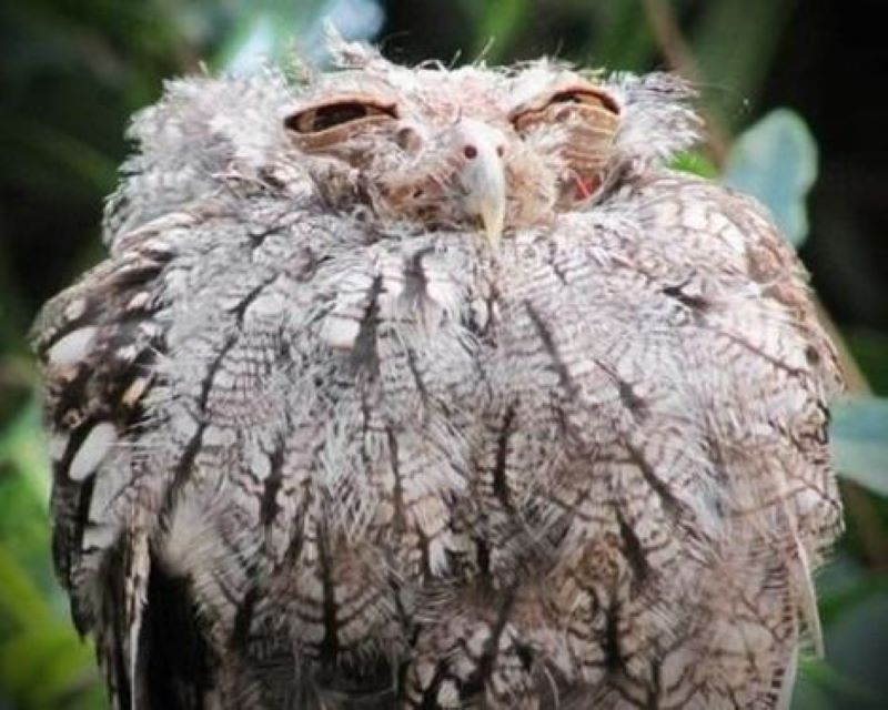 That's A Nope From The Owl