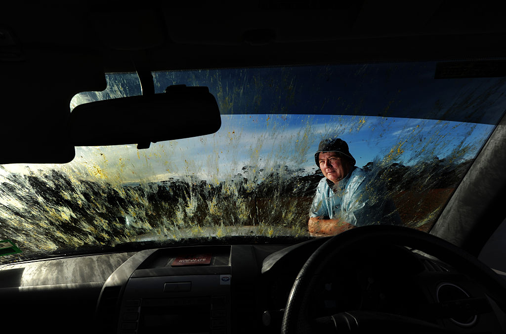 a windscreen splattered with dead locusts