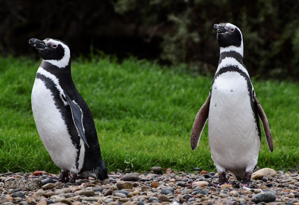 two penguins standing on some pebbles