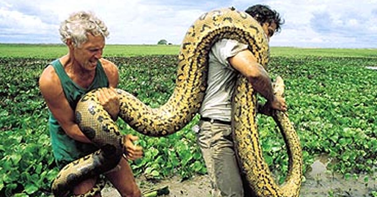 a big anaconda