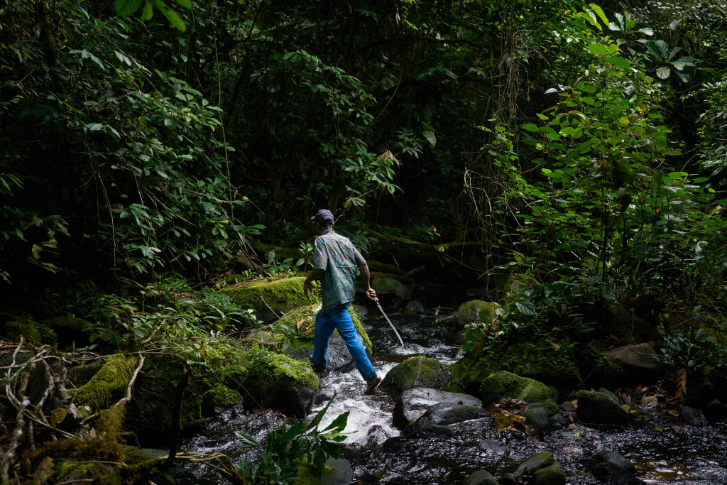 A man crosses a stream in a forest.