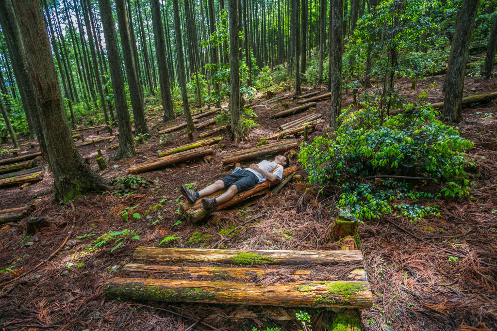A man lies down in a forest.