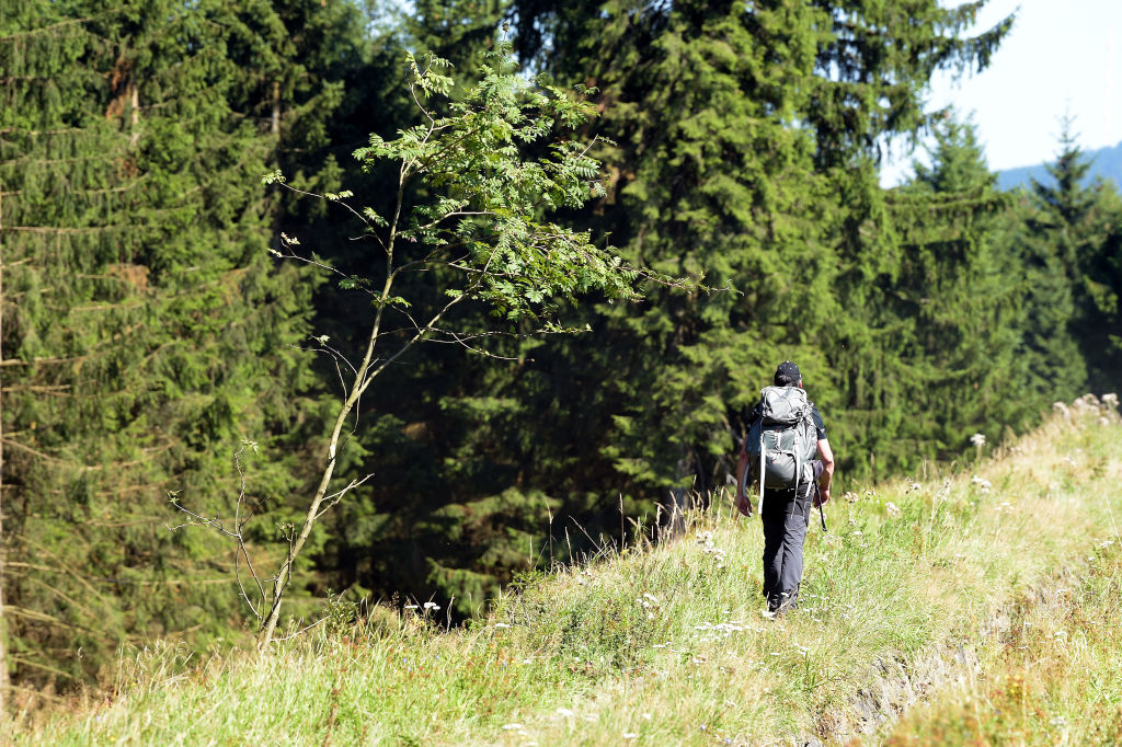 A man hikes at the top of a hill clearing next to forest trees.