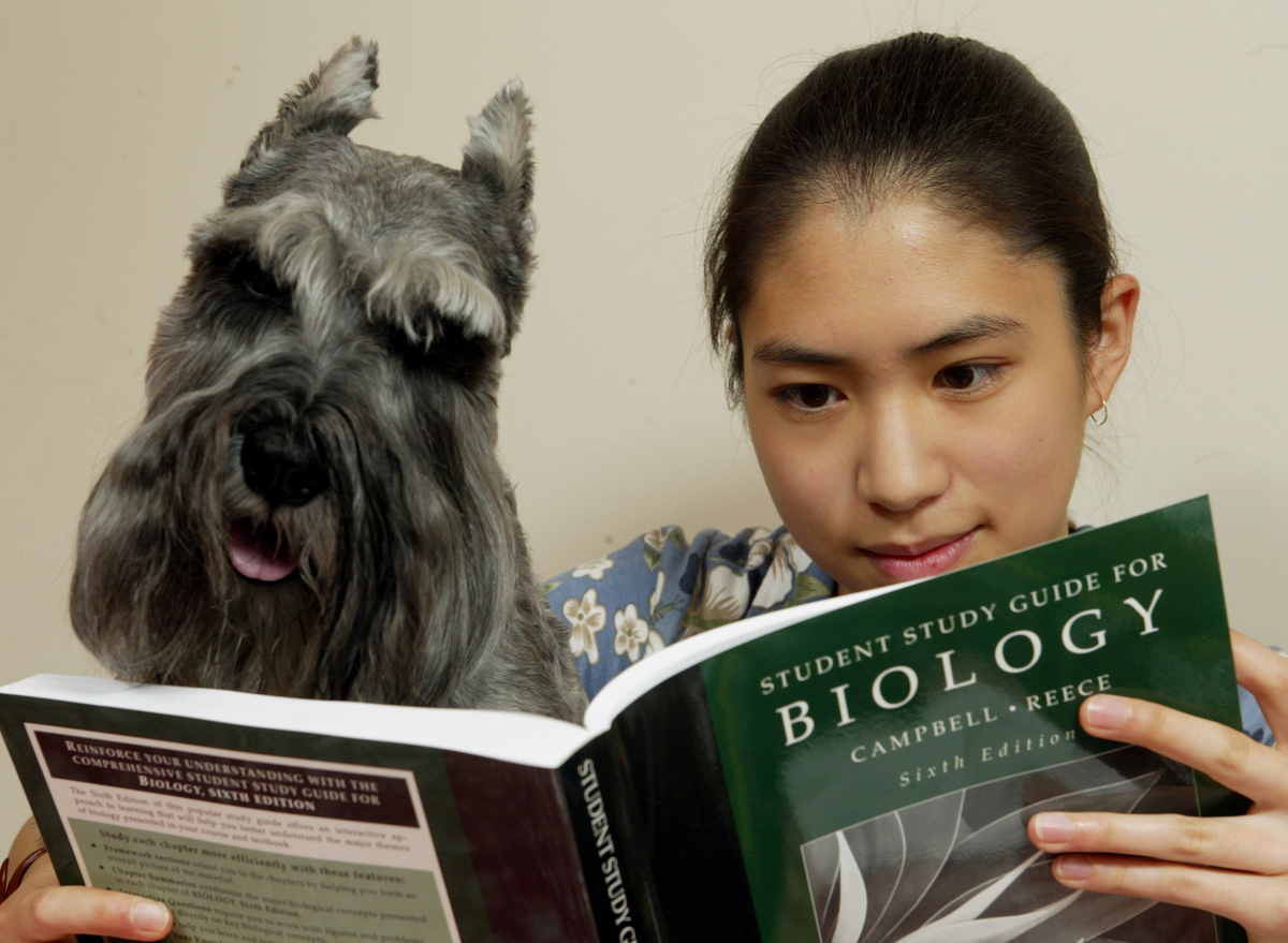 An owner reads a biology textbook with her miniature schnauzer.
