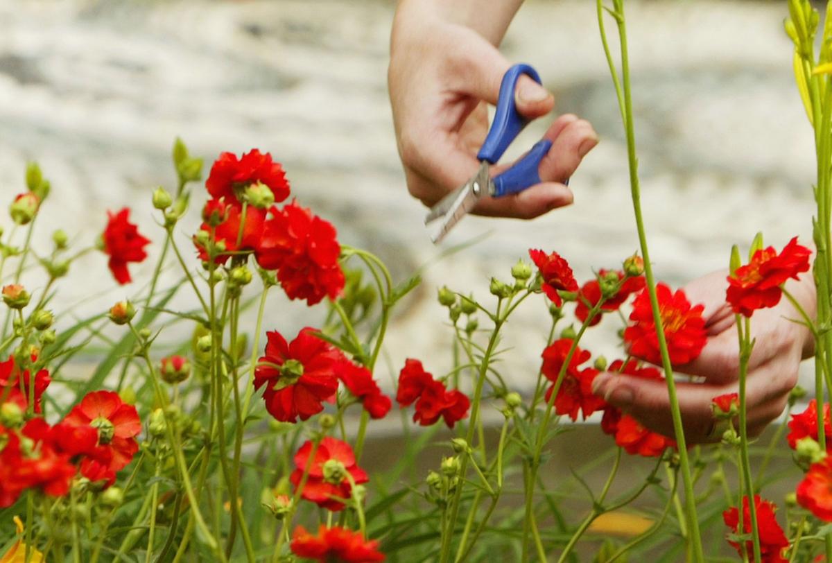 A woman snips flowers to arrange in a garden.