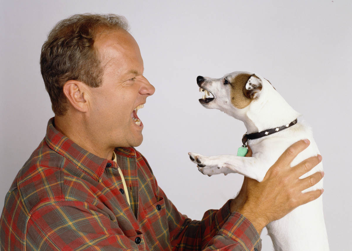 Kelsey Grammer snarls at a Jack Russell Terrier he's holding.