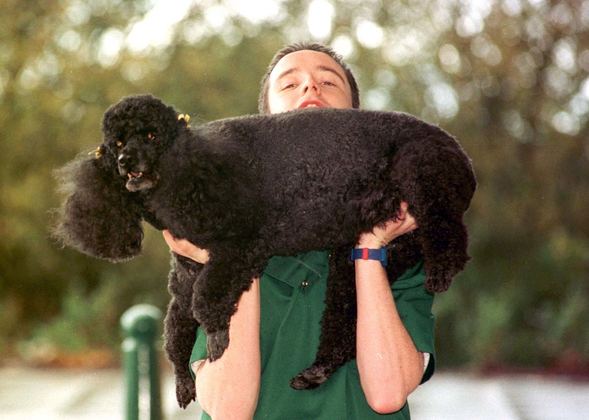 An owner holds up his overweight poodle.