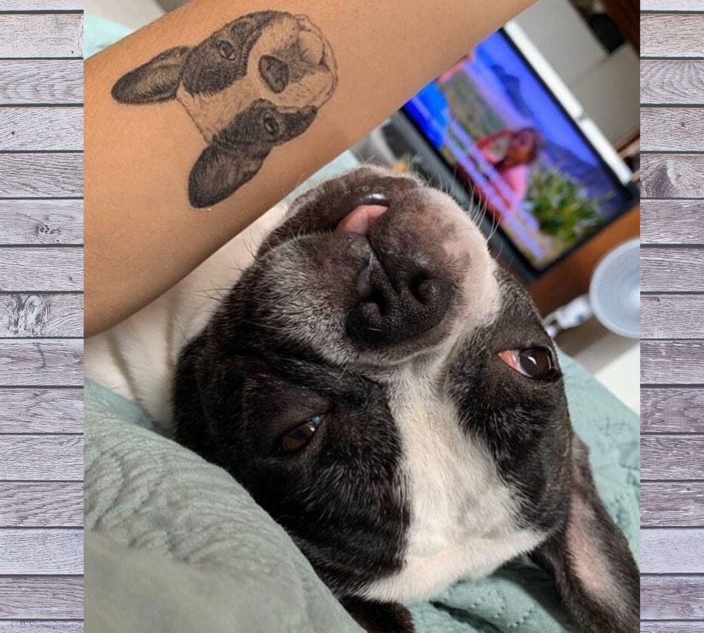 boston terrier tattoo