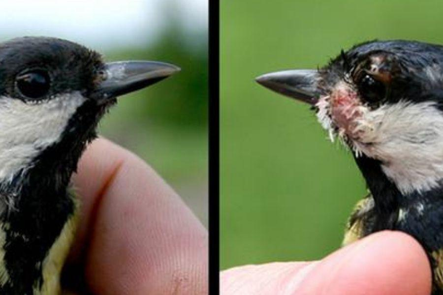 bird beak differences
