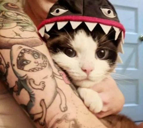 shark cat tattoo